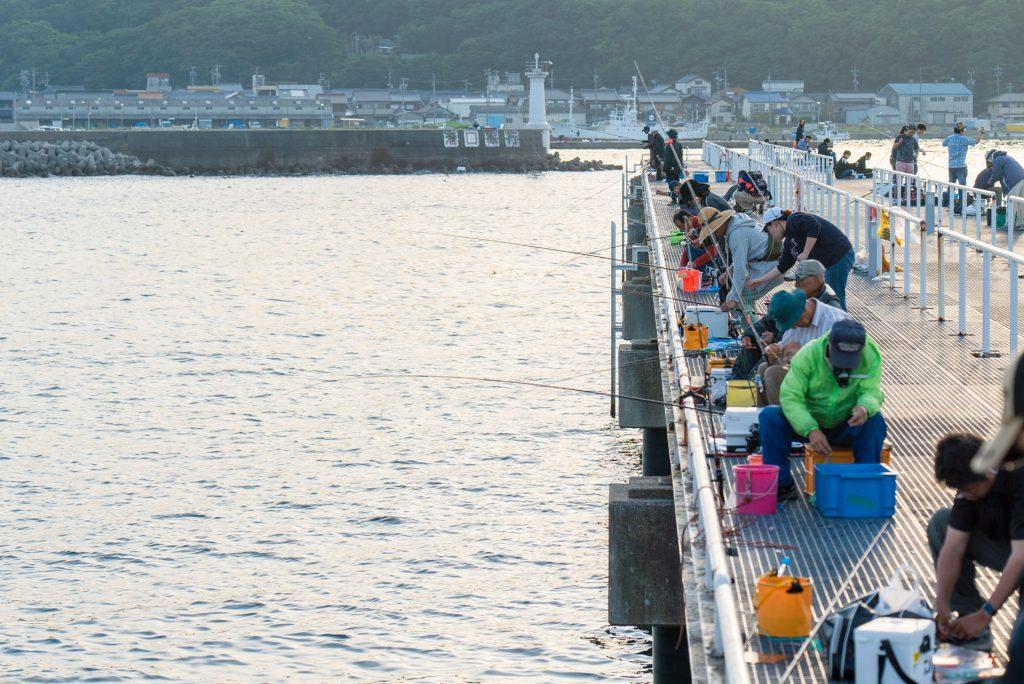 桟橋 イワシ 釣り 豊浜