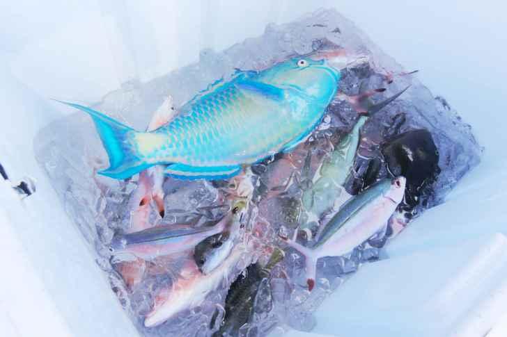 【2020年版】おすすめの釣り専用小型クーラーボックス7選|サイズの選び方、必要な容量