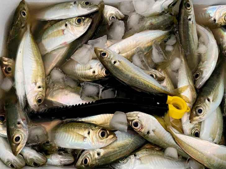 堤防サビキ釣りにおすすめの最強仕掛け7選|大漁間違いない仕掛けをご紹介