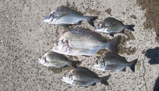 堤防ダンゴ釣り入門|足元にダンゴを落とすだけでチヌが釣れる新釣法